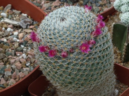 Galleria fotografica fiori flowers gallery for Fiori di agosto